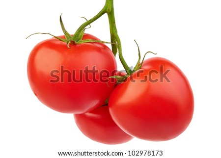 Closeup of tomatoes on the vine isolated on white - stock photo