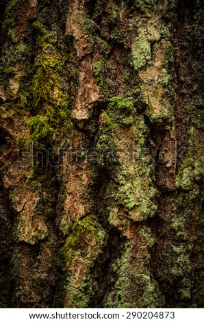 closeup of tree bark covered with moss - stock photo