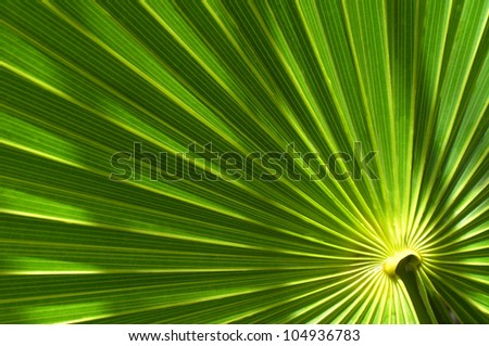 closeup of tropical palm leaf with bright green leaves - stock photo