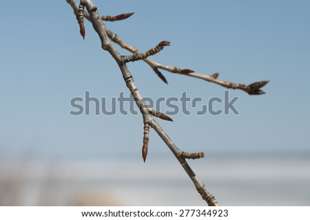 Closeup of twigs, Hecla Grindstone Provincial Park, Manitoba, Canada - stock photo