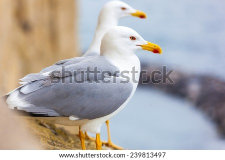 Closeup of two seagulls sitting on a cliff. - stock photo