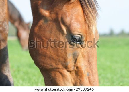 Closeup of (veins of) the horse's head - stock photo