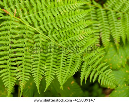 Closeup of Woodland Plants on the Forest Floor - stock photo