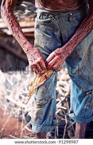 Closeup old working farmer hands, twisting  cigar - stock photo