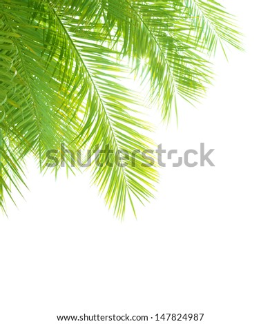 Closeup on beautiful fresh green palm tree leaves border isolated on white background, exotic foliage, tropical vacation, summer holidays concept - stock photo