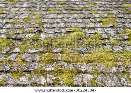 Closeup on old and weathered wooden roof shingle covered by moss - stock photo