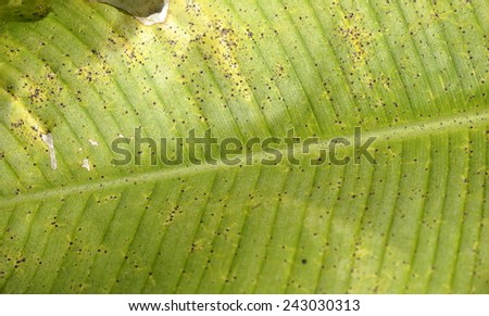 Closeup on palm leaf - stock photo