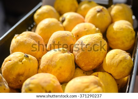 Closeup on quince fruits at a local market, yellow background - stock photo
