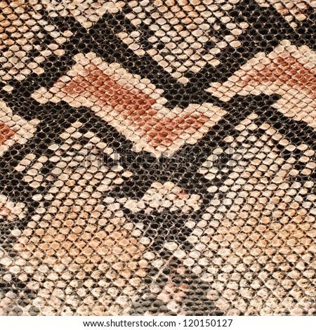 Closeup on snake skin pattern background. - stock photo