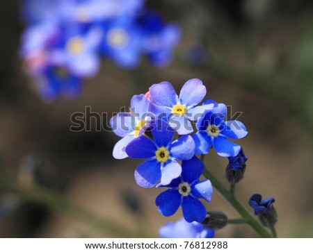 Closeup photo of a little flower detail - stock photo