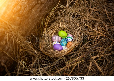 Closeup photo of colorful easter eggs lying in nest at forest - stock photo