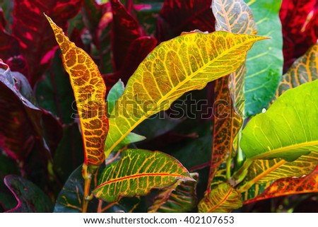 Closeup photo of colorful wild tropical plant leaves - stock photo