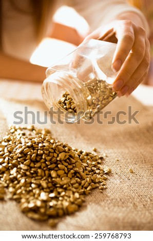 Closeup photo of miner empties the jar with gold on the burlap - stock photo