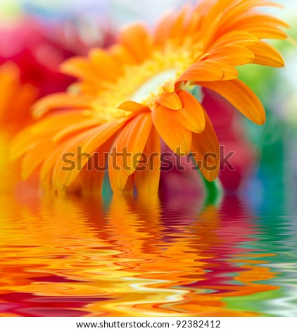 Closeup photo of orange daisy-gerbera - stock photo