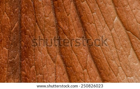 Closeup picture of a dry leaf showing its texture  - stock photo