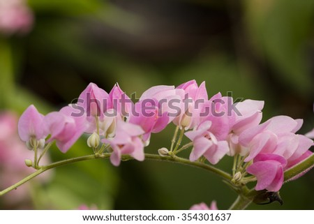closeup pink ivy flower - stock photo