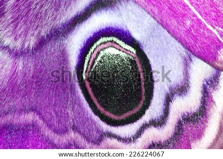 Closeup pink wings butterfly - stock photo