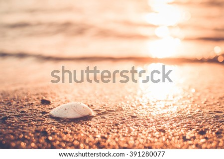 closeup shell on sandy ocean beach on sunset. natural vintage summer background - stock photo