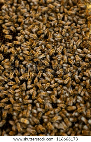 closeup shoot of a bee swarm working - stock photo