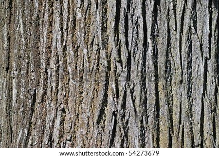 Closeup shoot of bark of old tree. - stock photo