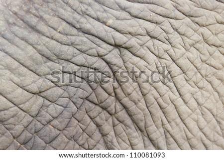 closeup shot of an elephant skin - stock photo