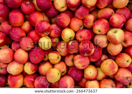Closeup shot of fresh red and yellow apples - stock photo