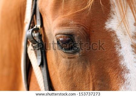 closeup shot on the eye  of beautiful beige horse - stock photo