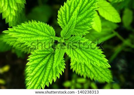 Closeup shot on various green leaves - stock photo