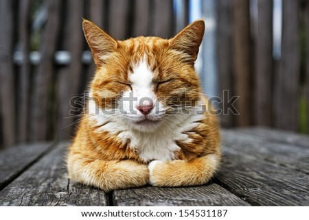 Closeup sleepy cat  - stock photo