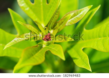closeup small red frower growing up blossom - stock photo