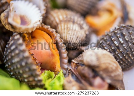 Closeup Steam blood cockle in plate - stock photo