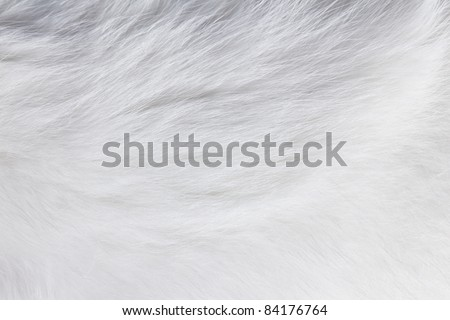 Closeup texture of white cat fur - stock photo
