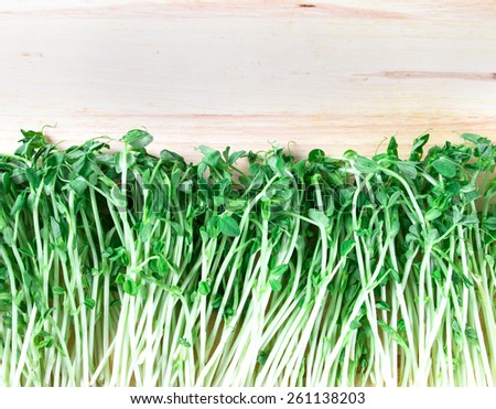 closeup the green pea sprout  on white background - stock photo