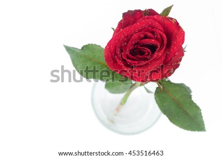 Closeup top view red rose color water glass on white background, love and romantic concept, selective focus  - stock photo