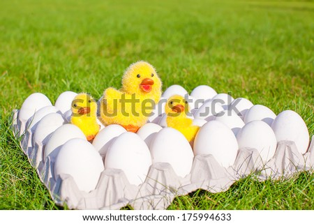 Closeup tray white eggs with the symbols of Easter yellow chickens - stock photo