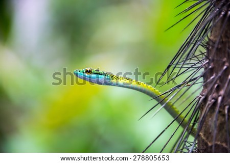 Closeup view of a parrot snake in the Amazon rainforest in Peru - stock photo