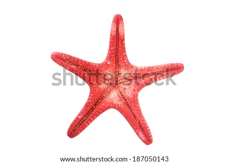 closeup view of a reddish starfish or sea star. Class: Asteroidea. Isolated - stock photo