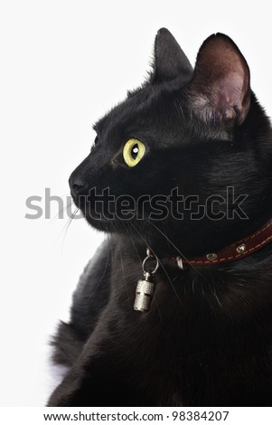 closeup view of black cat face isolated on white - stock photo
