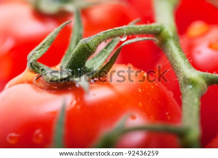 Closeup view of fresh ripe cherry tomatoes on a branch - stock photo