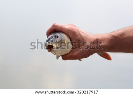 Closeup view of human male hand of fisher man holding one alive fresh wet fish catch with open mouth sunny day outdoor on natural background, horizontal picture - stock photo