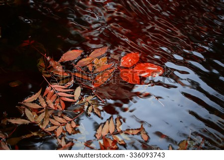 Closeup view of many beautiful colorful autumn tree leaves red yellow orange green colors floating on wavy water with reflection of nature on outdoor background, horizontal picture - stock photo