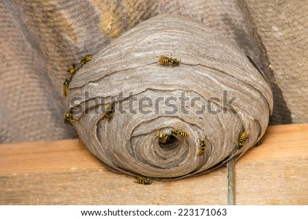 Closeup view of wasps and huge nest - stock photo