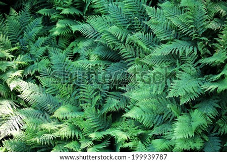 Closeup view on a green fern as a background - stock photo