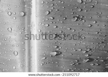 closeup water drop on banana leaf - stock photo