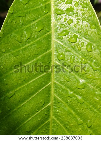closeup water drop on green leaf - stock photo