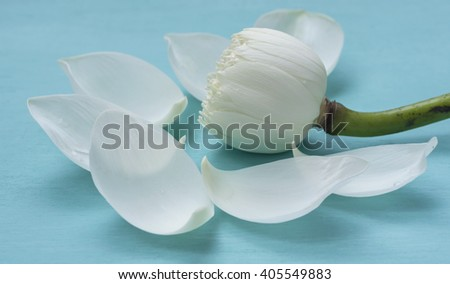 Closeup white lotus flower on blue background - stock photo