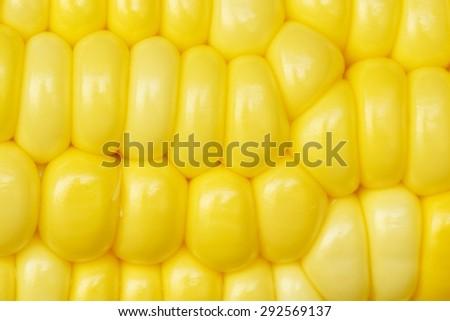 Closeup yellow corn - stock photo