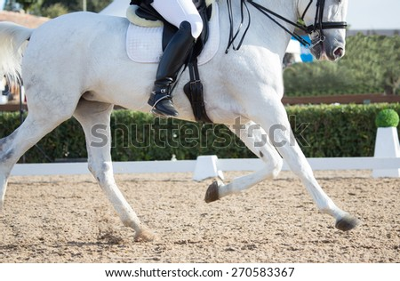 Closeups of a competition of dressage horses in Spain - stock photo