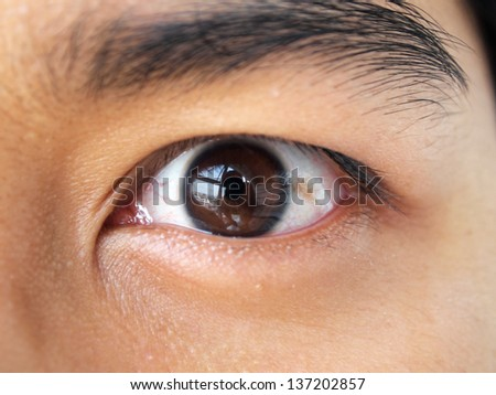 closeups picture of brown eyes from a woman - stock photo