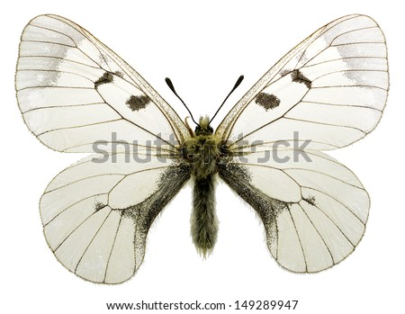 Clouded Apollo (Parnassius mnemosyne) living in mountainous areas, isolated on white background - stock photo
